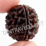 one-faced-round-rudraksha--by-Tantraveda.net